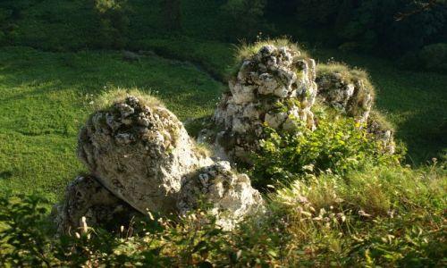 Zdjęcie POLSKA / Ojców / Zielony szlak ponad Jaskinią Ciemną / też palce