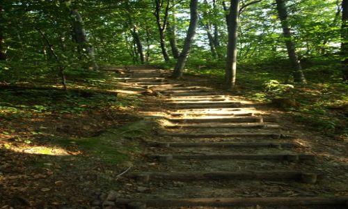 Zdjecie POLSKA / Ojców / Zielony szlak ponad Jaskinią Ciemną / A takimi ... nie ruchome?