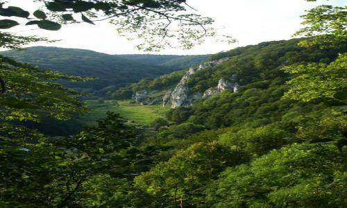 Zdjęcie POLSKA / Ojców / Zielony szlak ponad Jaskinią Ciemną / pomiędzy listkami