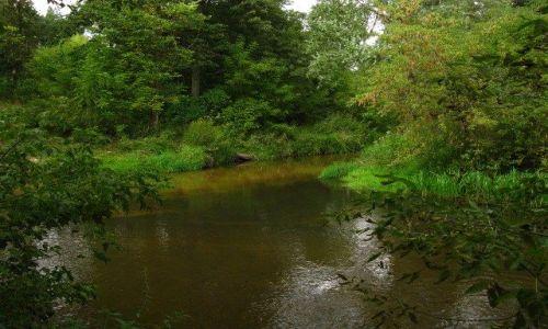 Zdjęcie POLSKA / Mazowsze / Mazowiecki Park Krajobrazowy / Rzeka Świder - ujście Mieni