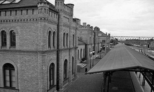 Zdjęcie POLSKA / łódzkie / Skierniewice / Dla Tigera30  b-cz :)