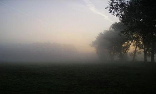 Zdjecie POLSKA / Wielkopolska / Okolice Leszna / Poranna mgła