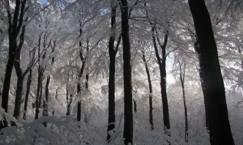 Zdjecie POLSKA / woj. dolnośląskie / Ślęża / las
