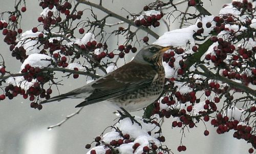 Zdjęcie POLSKA / brak / Kielce / Co to za ptak?