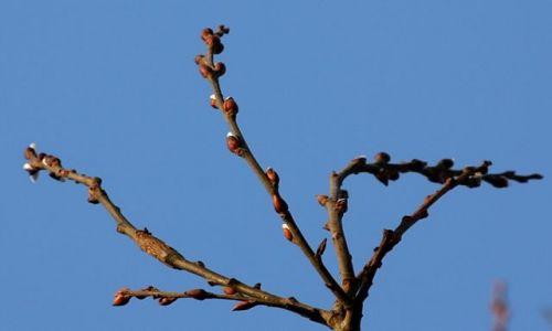 Zdjecie POLSKA / Warmia / okolice Olsztyna / Szukając wiosny