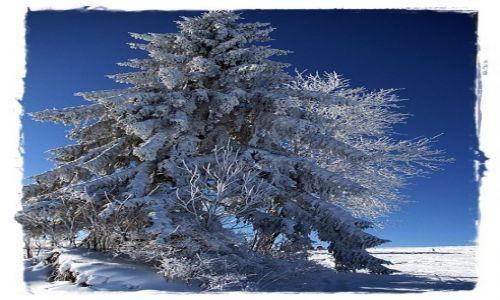 Zdjęcie POLSKA / -Tatry / ok.Witowa / zimowe drzewko
