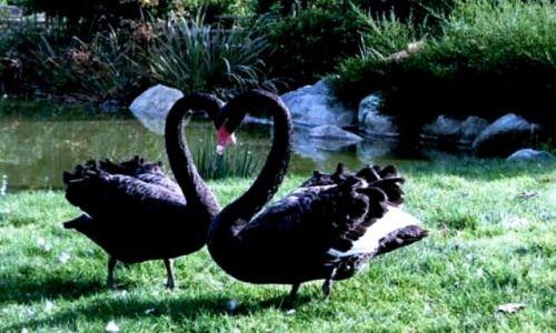 Zdjecie POLSKA / tak własciwie, to....cały świat :) / WALENTYNKI__ Jutro zakochani święto swoje mają, jutro moc życzeń sobie składają. Ja też ch / JUTRO WALENTYNKI