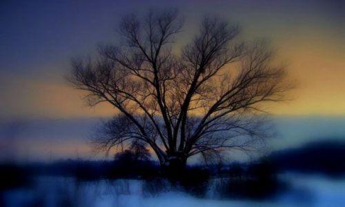POLSKA / łodzkie / prowincja / Stare drzewo i morze... śniegu;)
