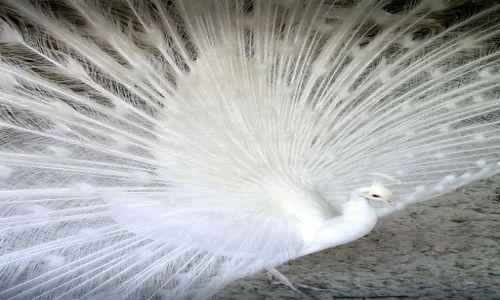 Zdjecie POLSKA / Świętokrzyskie / Młodzawy / Biały paw dla Z