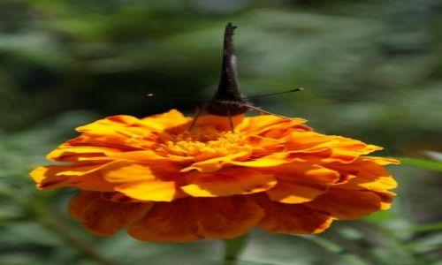 Zdjęcie POLSKA / brak / łąka / KONKURS motyl2