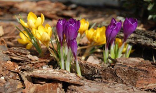 Zdjęcie POLSKA / Opolskie / Gogolin / Konkurs  -  Szukamy śladów wiosny