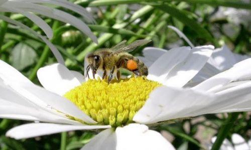 Zdjecie POLSKA / brak / Rzeszów / Konkurs pszczoł