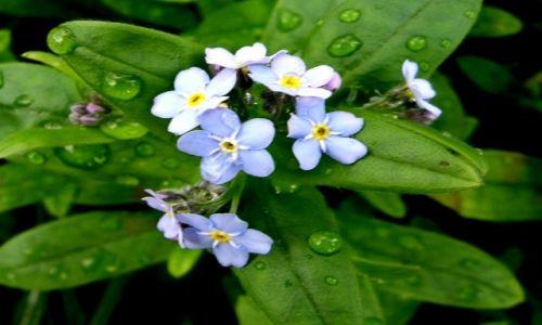 Zdjecie POLSKA / łodzkie / - / kwiatki z bajki