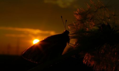 Zdjecie POLSKA / - / - / Motyl o zachodzie