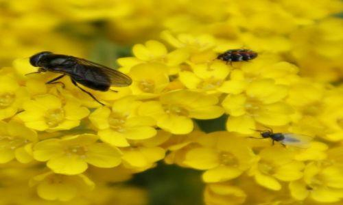 Zdjecie POLSKA / Na kwwiatach / w ogrodzie / Trio w ogrodzie
