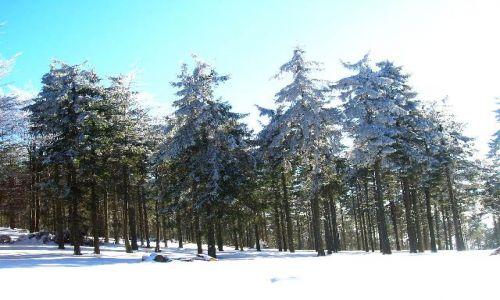 Zdjecie POLSKA / Góry Sowie / Kalenica / zimowy las