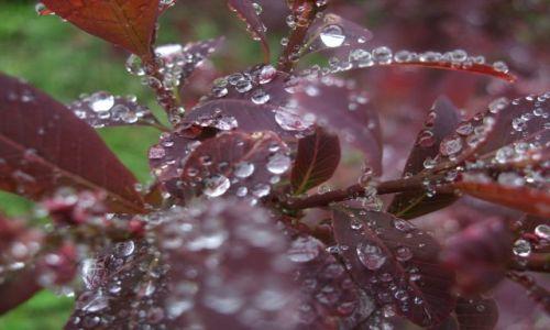 Zdjecie POLSKA / - / park / po  deszczu