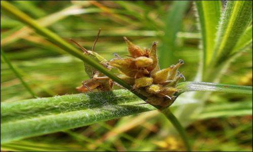 Zdjęcie POLSKA / łódzkie / łąka / Co w trawie piszczy...