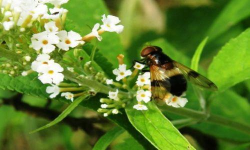 Zdjecie POLSKA / - / - / Pszczółka