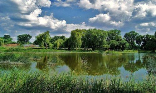 Zdjecie POLSKA / lubelszczyzna / Zespół Pałacowo-Parkowy w Wierzchowiskach / Lato w Wierzchowiskach