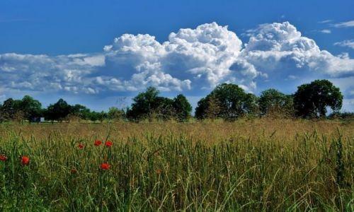 Zdjecie POLSKA / lubelszczyzna / Wierzchowiska / Chmury i drzewa