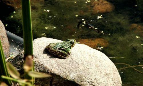 Zdjecie POLSKA / Wrocław / Ogród Botaniczny / żabka