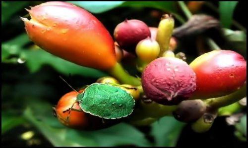 Zdjecie POLSKA / łodzkie / Rogów / Trzy kolory- z zielonym robalem