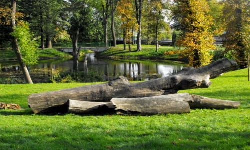 Zdjęcie POLSKA / Kozienice / park / jesień w Kozienicach