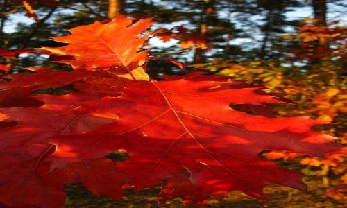 Zdjęcie POLSKA / Mazowsze / Mazowiecki Park Krajobrazowy / Jesień w MPK