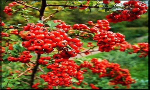 Zdjęcie POLSKA / lubelszczyzna / Ogród Botaniczny w Lublinie / Kolory jesieni
