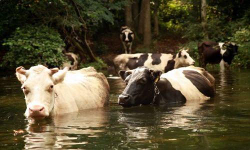 Zdjęcie POLSKA / Pojezierze Mazurskie / Krutynia / Hipopotamy...odmiana swojska, krajowa