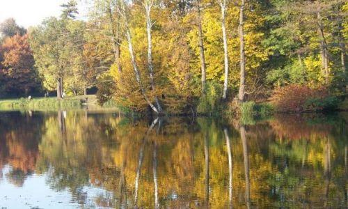 Zdjecie POLSKA / Śląsk / Park / jesień