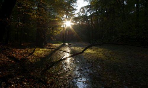 Zdjęcie POLSKA / Lubuskie / okolice Zielonej Góry / Jesień