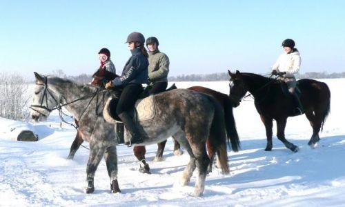 Zdjęcie POLSKA / Dolny Śląsk / Kunice / Na śniegu