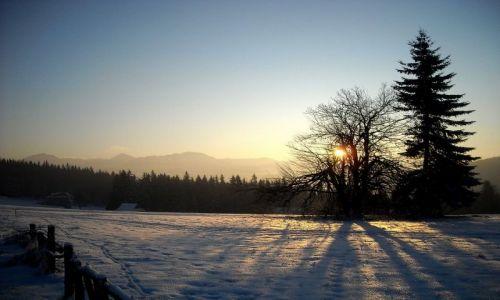 Zdjęcie POLSKA / Podhale / Kościelisko / ...zimowo...