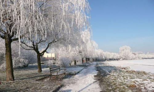 Zdjęcie POLSKA / Dolny Śląsk / Kunice / Białe wierzby