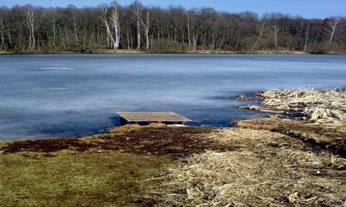 Zdjecie POLSKA / okolice Radomia / zalew w Jedlni / przedwiośnie 2011