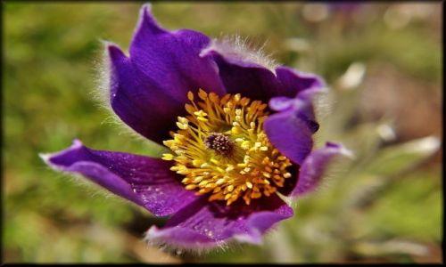 Zdjęcie POLSKA / lubelszczyzna / Ogród Botaniczny / Wiosna w Botaniku