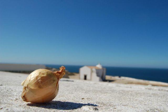 Zdj�cia: Sagres - Przyl�dek �w. Wincentego, Algarve, Polska cebulka podbija Sagres, PORTUGALIA