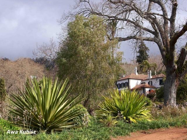 Zdjęcia: Funchal, Wyspa Madera, Quinta w Ogrodach Palheiro, PORTUGALIA