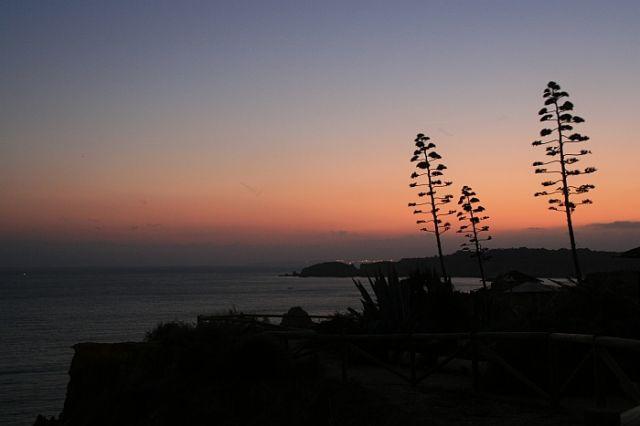 Zdjęcia: praia de rocha, algarve, agawy o zmierzchu, PORTUGALIA