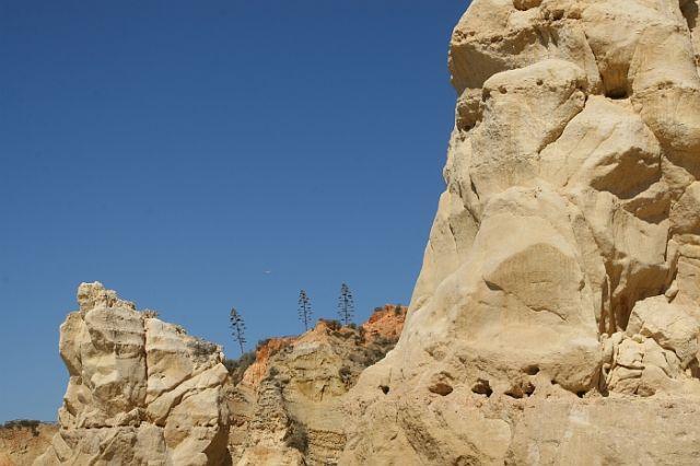 Zdjęcia: praia de rocha, algarve, agawy na skale, PORTUGALIA
