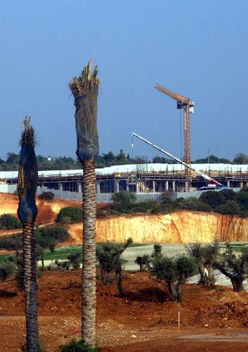 Zdjęcia: Loule, algarve, chronimy palmy, PORTUGALIA
