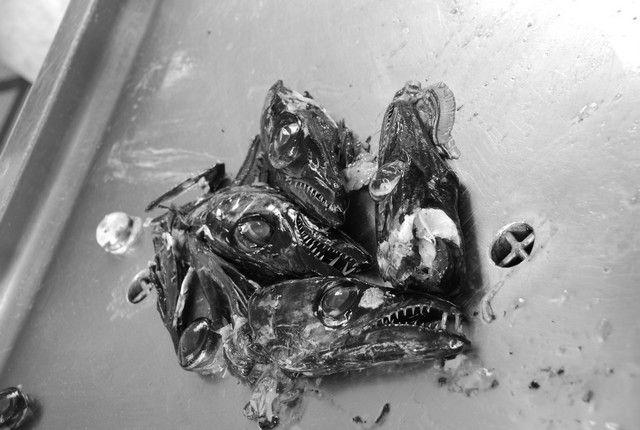 Zdjęcia: Funczal , Madera, ESPADA - i jej trujące zęby, PORTUGALIA