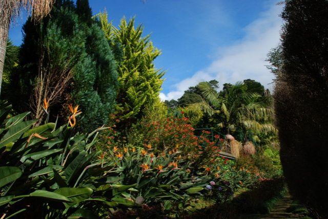Zdj�cia: Monte, Madera, Monte Botanic Garden - mimio zimiy - u nich zawsze wiosna, PORTUGALIA