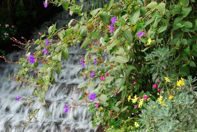 Zdj�cia: Monte, Madera, Monte Botanic Garden - wieczna wiosna, PORTUGALIA