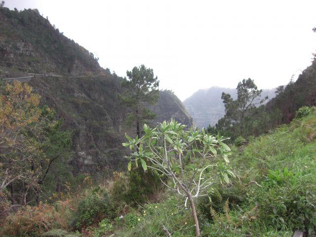 Zdjęcia: Madeira - Funchal, Góry 5, PORTUGALIA