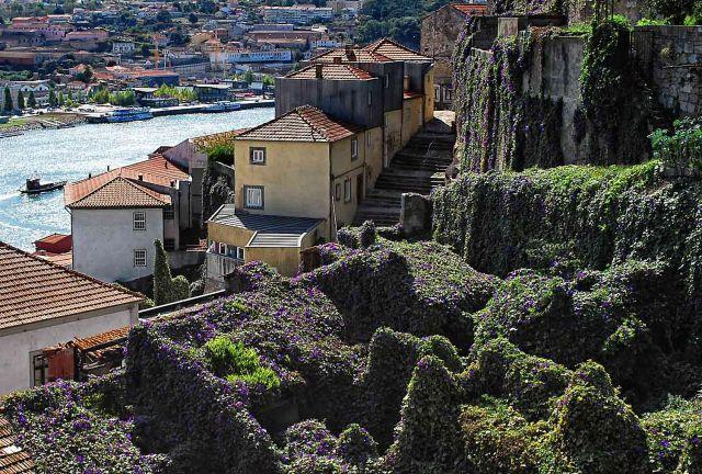 Zdjęcia: Porto, Grande Porto, Kwieciste dachy Porto, PORTUGALIA