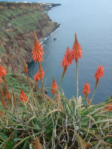 Zdjęcia: Madeira, Madeira, Exotic flower, PORTUGALIA