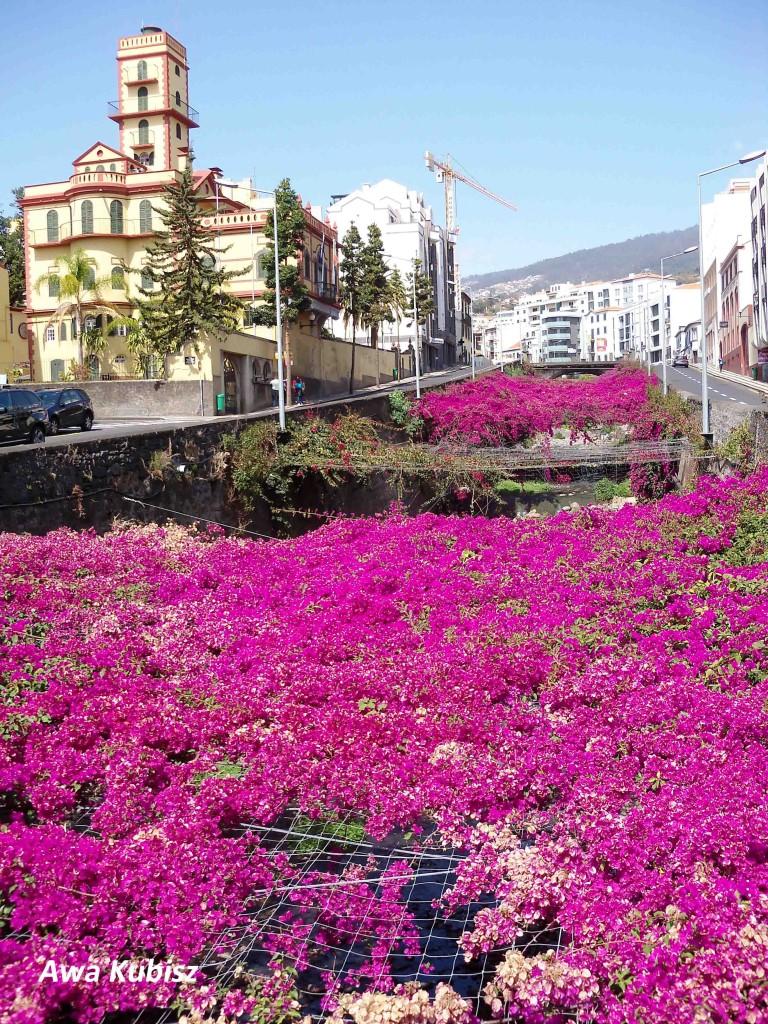 Zdjęcia: Funchal, Wyspa Madera, Kwiaty nad Ribeira de Joao Gomes, PORTUGALIA